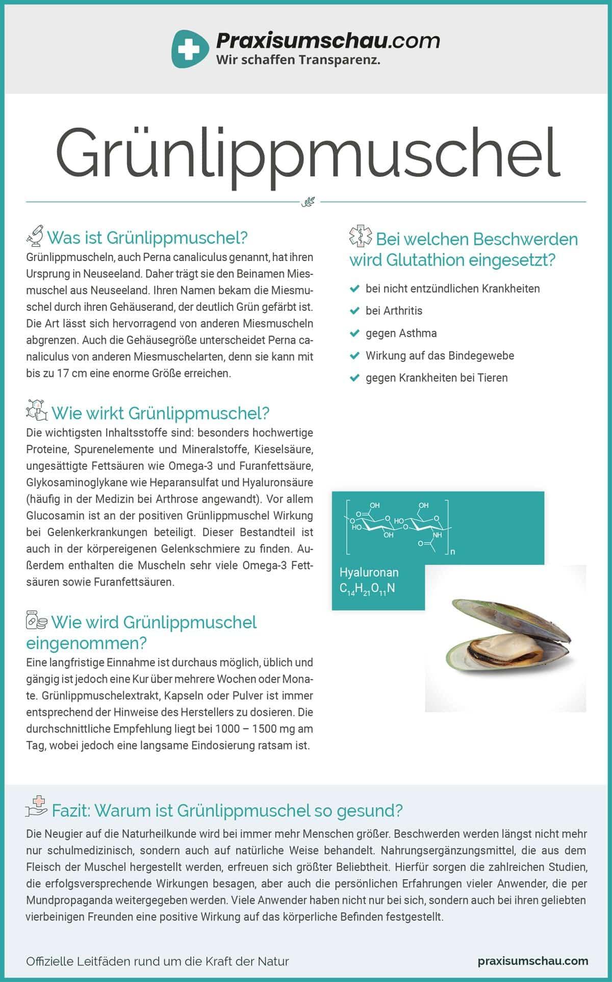 Gruennlippmuschel infografik pu
