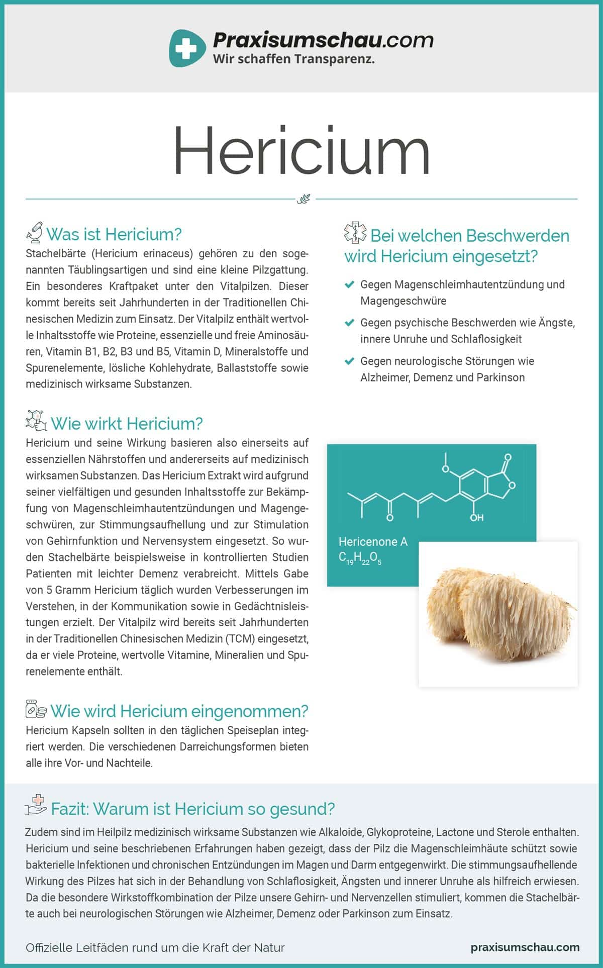 Hericium infografik pu