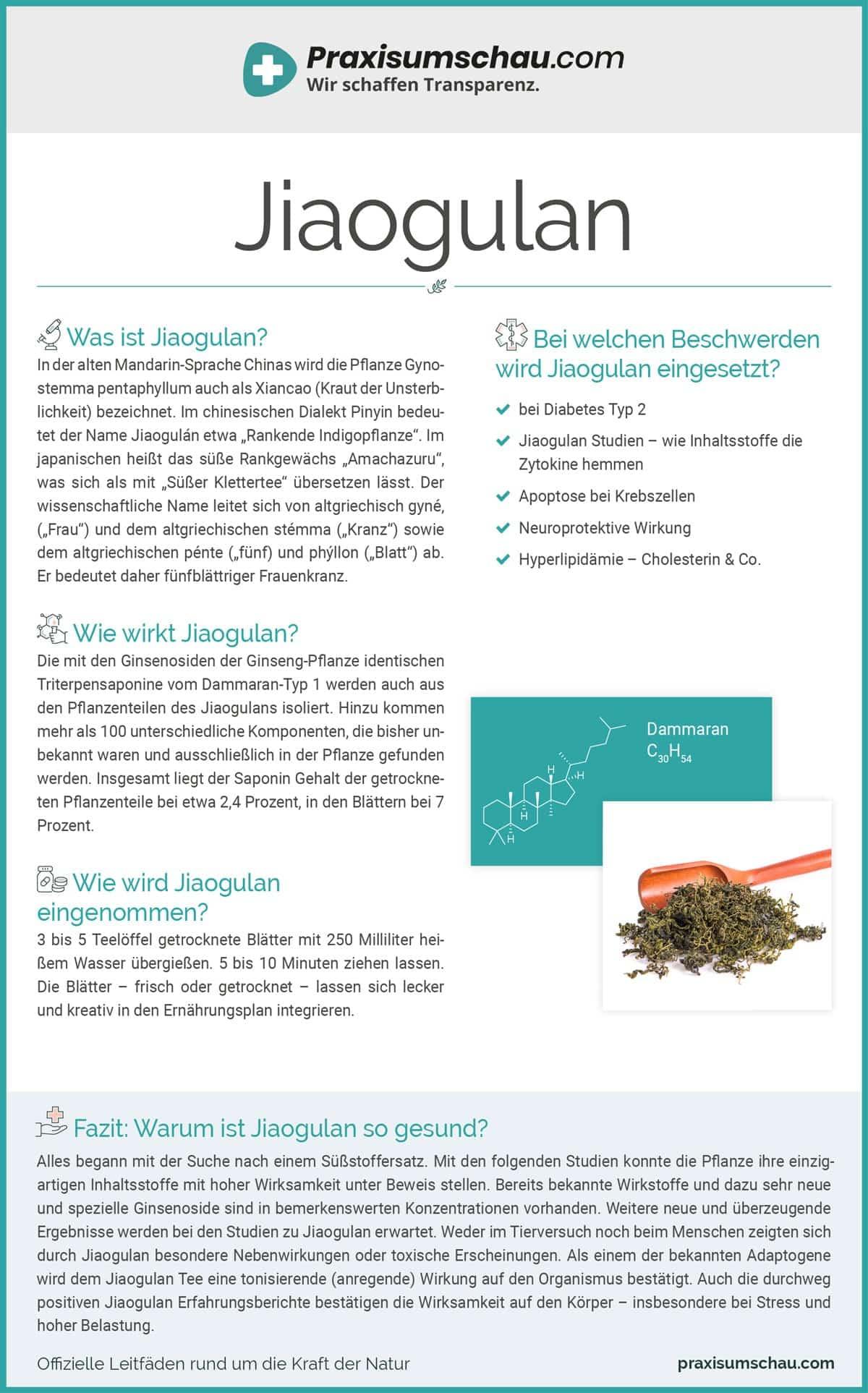 Jiaogulan infografik pu
